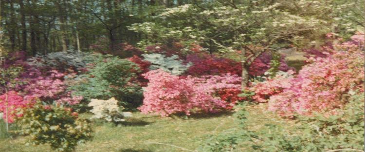 Maryland/Flora