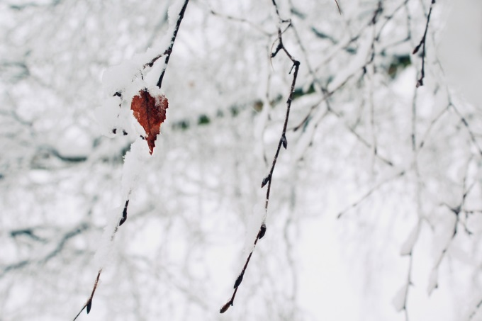 tree/leaf/snow