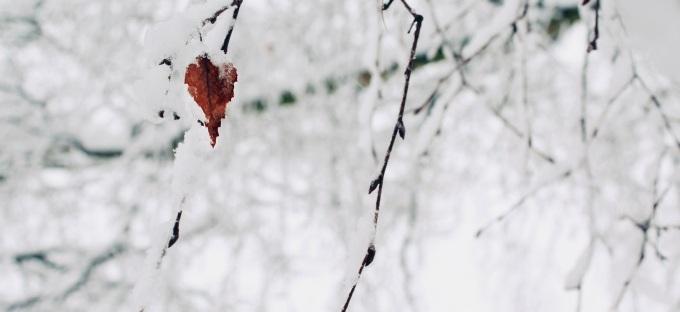 tree/leaf/snow