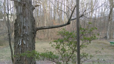 woods/wild life