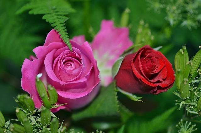 rose/mothersday